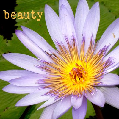 Waterflower-beauty