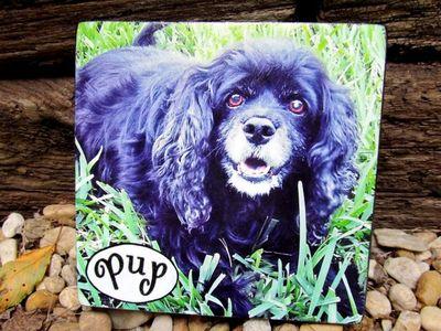 Pup:Max.